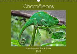 Chamäleons – faszinierende Freak Show (Wandkalender 2019 DIN A3 quer) von Edel,  Anja