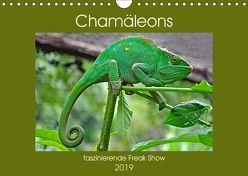 Chamäleons – faszinierende Freak Show (Wandkalender 2019 DIN A4 quer) von Edel,  Anja