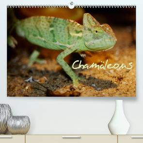 Chamäleons (Premium, hochwertiger DIN A2 Wandkalender 2020, Kunstdruck in Hochglanz) von Chawera