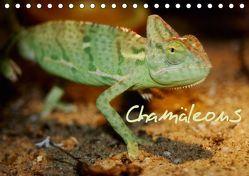 Chamäleons (Tischkalender 2019 DIN A5 quer) von Chawera,  k.A.