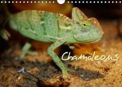 Chamäleons (Wandkalender 2018 DIN A4 quer) von Chawera,  k.A.