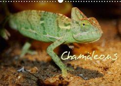 Chamäleons (Wandkalender 2019 DIN A3 quer) von Chawera,  k.A.