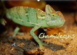 Chamäleons (Wandkalender 2020 DIN A2 quer) von Chawera