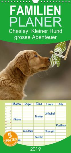 Chesley Kleiner Hund grosse Abenteuer – Familienplaner hoch (Wandkalender 2019 , 21 cm x 45 cm, hoch) von Bea Müller,  Hundefotografie