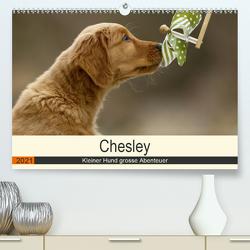 Chesley Kleiner Hund grosse Abenteuer (Premium, hochwertiger DIN A2 Wandkalender 2021, Kunstdruck in Hochglanz) von Bea Müller,  Hundefotografie