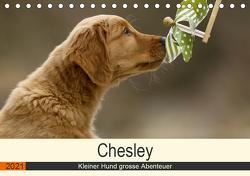 Chesley Kleiner Hund grosse Abenteuer (Tischkalender 2021 DIN A5 quer) von Bea Müller,  Hundefotografie