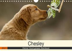 Chesley Kleiner Hund grosse Abenteuer (Wandkalender 2021 DIN A4 quer) von Bea Müller,  Hundefotografie
