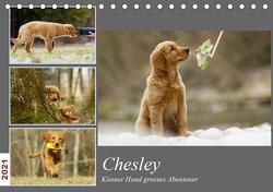 Chesley Kleiner Hund Grosses AbenteuerCH-Version (Tischkalender 2021 DIN A5 quer) von Bea Müller,  Hundfotografin