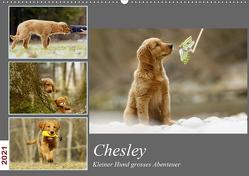 Chesley Kleiner Hund Grosses AbenteuerCH-Version (Wandkalender 2021 DIN A2 quer) von Bea Müller,  Hundfotografin