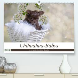 Chihuahua-Babys – Amy und Angel im Studio (Premium, hochwertiger DIN A2 Wandkalender 2020, Kunstdruck in Hochglanz) von Teßen,  Sonja