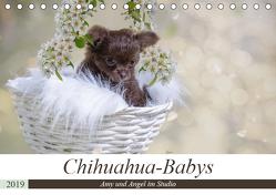 Chihuahua-Babys – Amy und Angel im Studio (Tischkalender 2019 DIN A5 quer) von Teßen,  Sonja