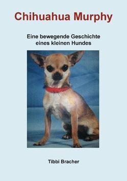 Chihuahua Murphy von Bracher,  Tibbi