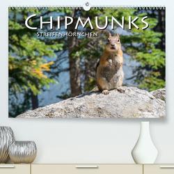Chipmunks Streifenhörnchen (Premium, hochwertiger DIN A2 Wandkalender 2020, Kunstdruck in Hochglanz) von Styppa,  Robert