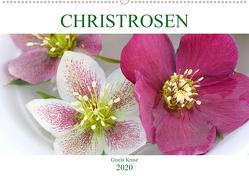 Christrosen (Wandkalender 2020 DIN A2 quer) von Kruse,  Gisela