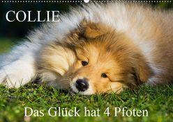 Collie – Das Glück hat 4 Pfoten (Wandkalender 2019 DIN A2 quer) von Starick,  Sigrid