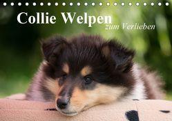 Collie Welpen zum Verlieben (Tischkalender 2019 DIN A5 quer) von Quentin,  Thomas