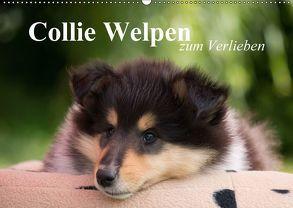 Collie Welpen zum Verlieben (Wandkalender 2018 DIN A2 quer) von Quentin,  Thomas