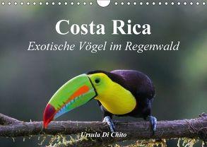 Costa Rica – Exotische Vögel im Regenwald (Wandkalender 2018 DIN A4 quer) von Di Chito,  Ursula