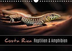 Costa Rica – Reptilien und Amphibien (Wandkalender 2019 DIN A4 quer) von Eßer,  Kevin