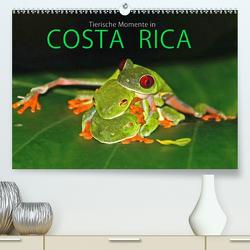 COSTA RICA – Tierische Momente (Premium, hochwertiger DIN A2 Wandkalender 2020, Kunstdruck in Hochglanz) von Matziol,  Michael
