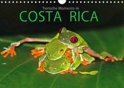 COSTA RICA – Tierische Momente (Wandkalender 2019 DIN A4 quer) von Matziol,  Michael