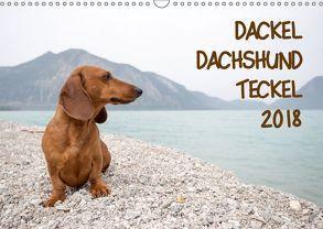 DACKEL DACHSHUND TECKEL 2018 (Wandkalender 2018 DIN A3 quer) von Mirsberger tierpfoto,  Annett