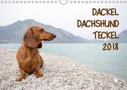 DACKEL DACHSHUND TECKEL 2018 (Wandkalender 2018 DIN A4 quer) von Mirsberger tierpfoto,  Annett