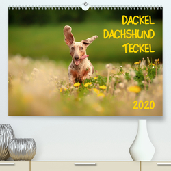 DACKEL DACHSHUND TECKEL 2020 (Premium, hochwertiger DIN A2 Wandkalender 2020, Kunstdruck in Hochglanz) von Mirsberger tierpfoto,  Annett