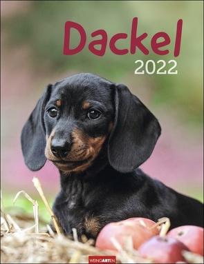 Dackel Kalender 2022 von Weingarten