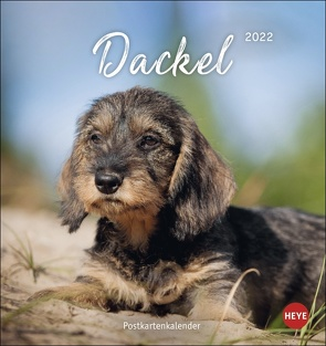 Dackel Postkartenkalender 2022 von Heye