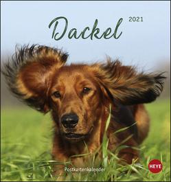 Dackel Postkartenkalender Kalender 2021 von Heye