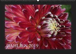 Dahlien 2019 (Wandkalender 2019 DIN A2 quer) von Pustolla,  Astrid