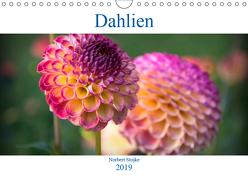 Dahlien – Blumenwunder der Natur (Wandkalender 2019 DIN A4 quer) von Stojke,  Norbert