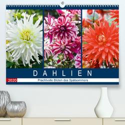 Dahlien – Prachtvolle Blüten des Spätsommers (Premium, hochwertiger DIN A2 Wandkalender 2020, Kunstdruck in Hochglanz) von Meyer,  Dieter