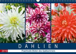 Dahlien – Prachtvolle Blüten des Spätsommers (Wandkalender 2019 DIN A3 quer) von Meyer,  Dieter