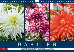 Dahlien – Prachtvolle Blüten des Spätsommers (Wandkalender 2019 DIN A4 quer) von Meyer,  Dieter