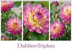 Dahlien-Triplets (Wandkalender 2019 DIN A2 quer) von B-B Müller,  Christine
