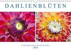 Dahlienblüten – Farbenprächtige Kraftspender (Wandkalender 2019 DIN A4 quer) von Frost,  Anja