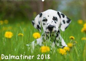 Dalmatiner 2018 (Wandkalender 2018 DIN A2 quer) von Dzierzawa,  Judith