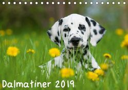 Dalmatiner 2019 (Tischkalender 2019 DIN A5 quer) von Dzierzawa,  Judith