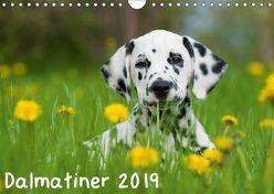Dalmatiner 2019 (Wandkalender 2019 DIN A4 quer) von Dzierzawa,  Judith