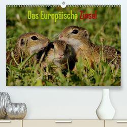 Das Europäische Ziesel (Premium, hochwertiger DIN A2 Wandkalender 2020, Kunstdruck in Hochglanz) von Erlwein,  Winfried
