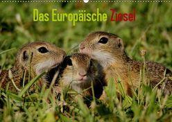 Das Europäische Ziesel (Wandkalender 2019 DIN A2 quer) von Erlwein,  Winfried