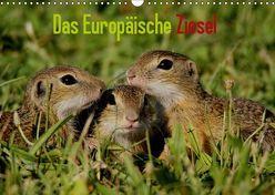 Das Europäische Ziesel (Wandkalender 2019 DIN A3 quer) von Erlwein,  Winfried