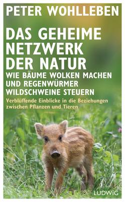 Das geheime Netzwerk der Natur von Wohlleben,  Peter