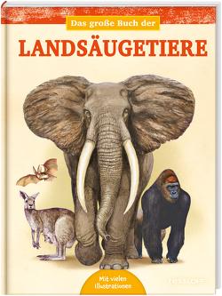 Das große Buch der Landsäugetiere von Alonso,  Juan Carlos, Kuhlmeier,  Antje, Tessloff Verlag