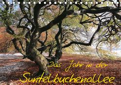 Das Jahr in der Süntelbuchenallee (Tischkalender 2020 DIN A5 quer) von Loewa,  Bernhard