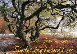 Das Jahr in der Süntelbuchenallee (Wandkalender 2019 DIN A2 quer) von Loewa,  Bernhard