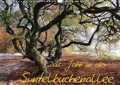Das Jahr in der Süntelbuchenallee (Wandkalender 2019 DIN A3 quer) von Loewa,  Bernhard