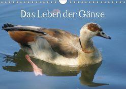 Das Leben der Gänse (Wandkalender 2019 DIN A4 quer) von kattobello